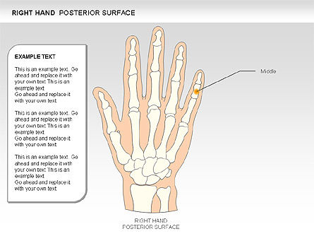 Right Hand Diagram, Slide 13, 00552, Medical Diagrams and Charts — PoweredTemplate.com
