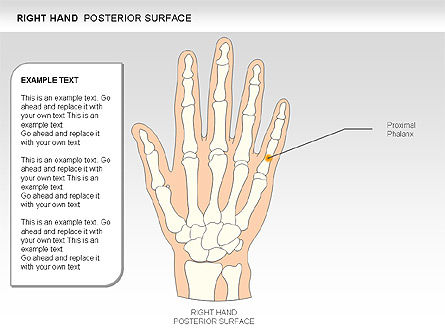 Right Hand Diagram, Slide 14, 00552, Medical Diagrams and Charts — PoweredTemplate.com