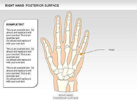 Right Hand Diagram, Slide 15, 00552, Medical Diagrams and Charts — PoweredTemplate.com