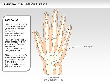 Right Hand Diagram, Slide 16, 00552, Medical Diagrams and Charts — PoweredTemplate.com