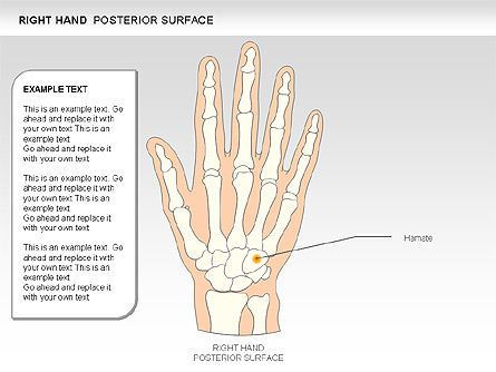 Right Hand Diagram, Slide 17, 00552, Medical Diagrams and Charts — PoweredTemplate.com
