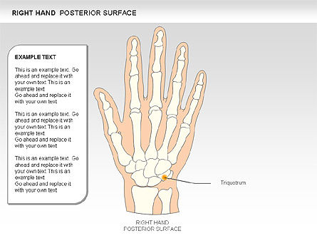 Right Hand Diagram, Slide 19, 00552, Medical Diagrams and Charts — PoweredTemplate.com