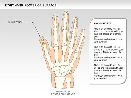 Right Hand Diagram, Slide 2, 00552, Medical Diagrams and Charts — PoweredTemplate.com