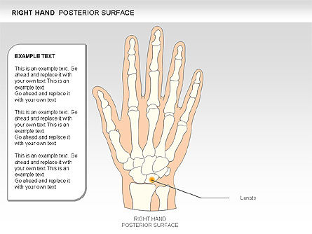 Right Hand Diagram, Slide 20, 00552, Medical Diagrams and Charts — PoweredTemplate.com
