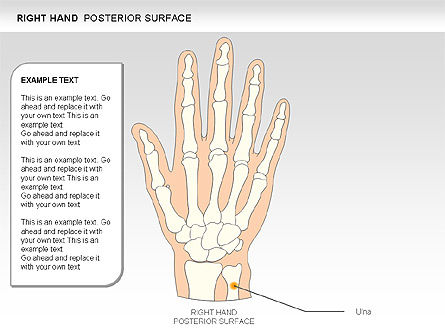 Right Hand Diagram, Slide 21, 00552, Medical Diagrams and Charts — PoweredTemplate.com