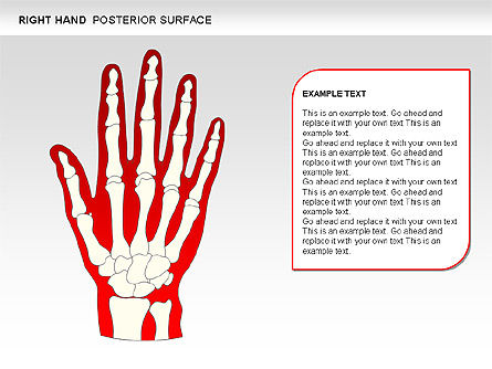 Right Hand Diagram, Slide 23, 00552, Medical Diagrams and Charts — PoweredTemplate.com