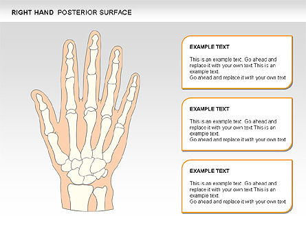 Right Hand Diagram, Slide 24, 00552, Medical Diagrams and Charts — PoweredTemplate.com