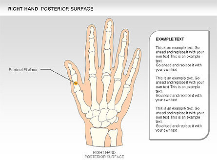 Right Hand Diagram, Slide 3, 00552, Medical Diagrams and Charts — PoweredTemplate.com