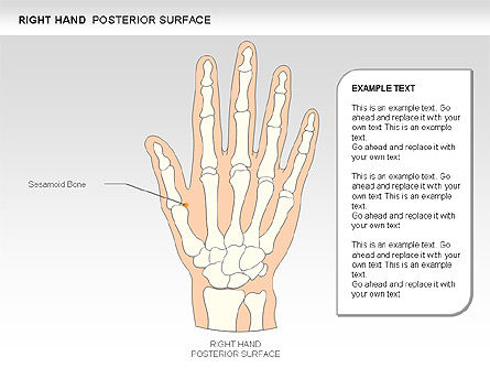 Right Hand Diagram, Slide 4, 00552, Medical Diagrams and Charts — PoweredTemplate.com