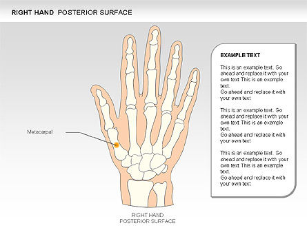 Right Hand Diagram, Slide 5, 00552, Medical Diagrams and Charts — PoweredTemplate.com