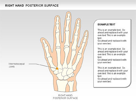 Right Hand Diagram, Slide 6, 00552, Medical Diagrams and Charts — PoweredTemplate.com