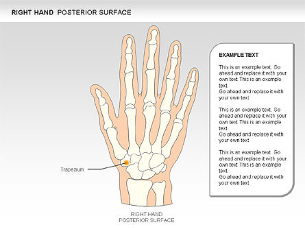 Right Hand Diagram, Slide 8, 00552, Medical Diagrams and Charts — PoweredTemplate.com