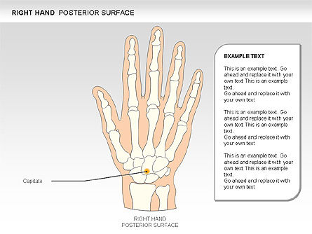 Right Hand Diagram, Slide 9, 00552, Medical Diagrams and Charts — PoweredTemplate.com