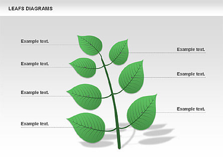 Leafs Diagram, Slide 4, 00707, Stage Diagrams — PoweredTemplate.com