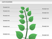 Stage Diagrams: Leafs diagram #00707