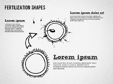 Fertilization Process Shapes, Slide 3, 01436, Medical Diagrams and Charts — PoweredTemplate.com