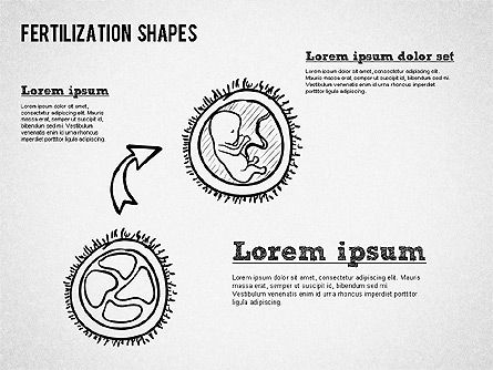 Fertilization Process Shapes, Slide 4, 01436, Medical Diagrams and Charts — PoweredTemplate.com
