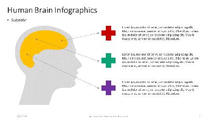 Infographics: Infográfico de cérebro humano #04361