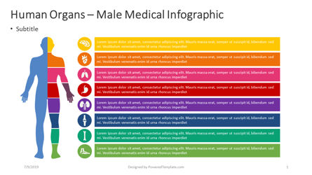 Infographics: Human Internal - Male Infographic #04362