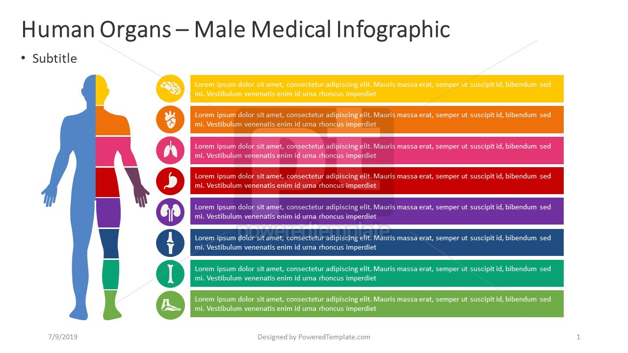 人类内部 - 男性信息图表, 04362, 信息图 — PoweredTemplate.com