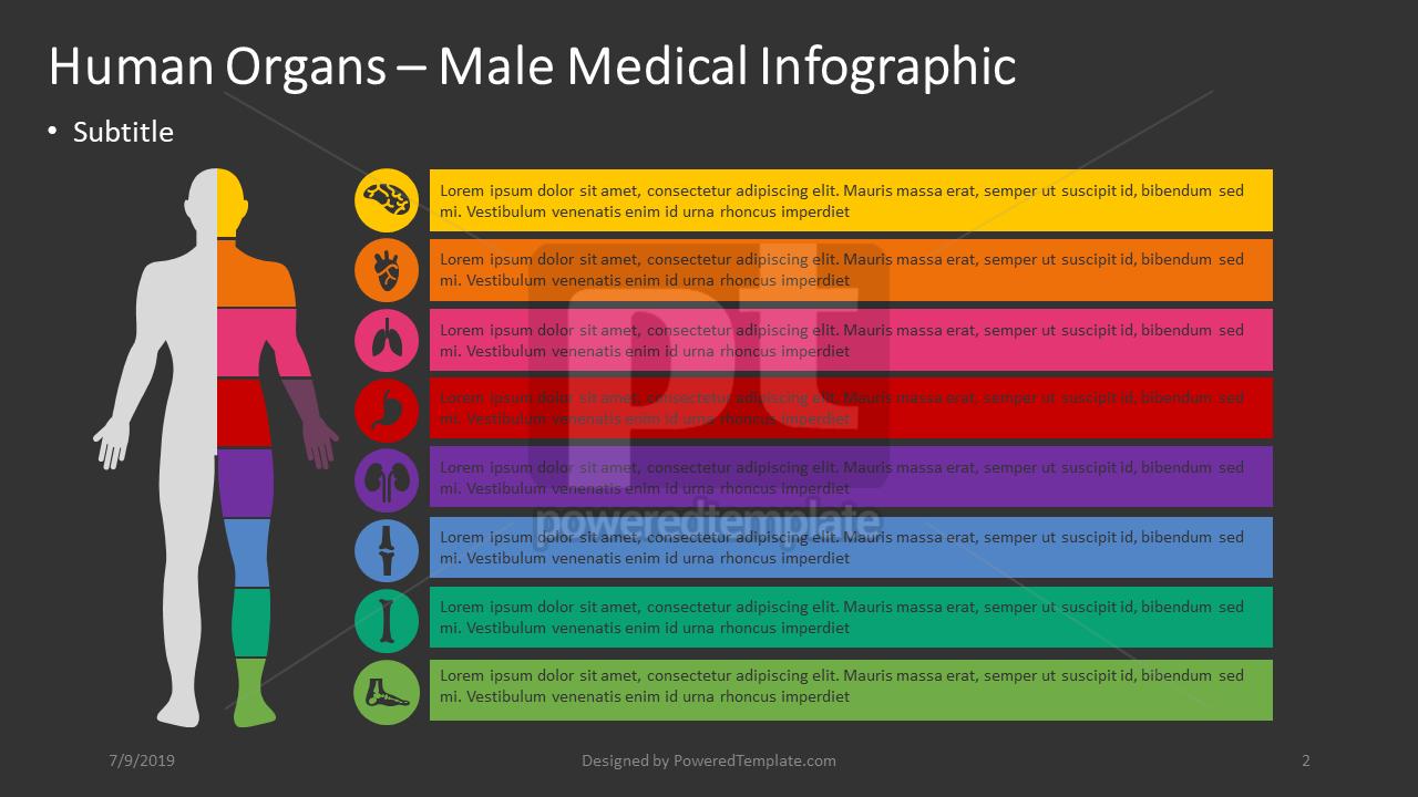 人类内部 - 男性信息图表, 幻灯片 2, 04362, 信息图 — PoweredTemplate.com