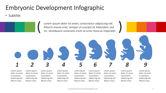 Infographics: Infográfico de desenvolvimento embrionário #04370