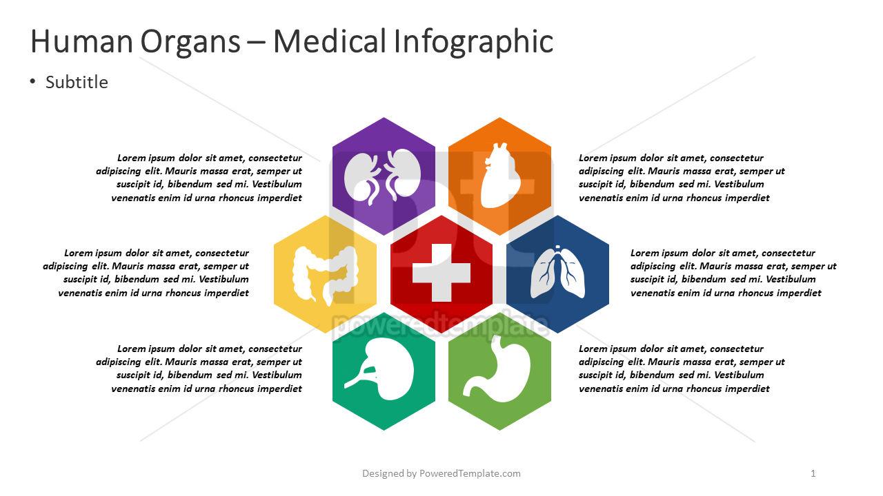 Organes humains - infographie médicale, 04372, Infographies — PoweredTemplate.com