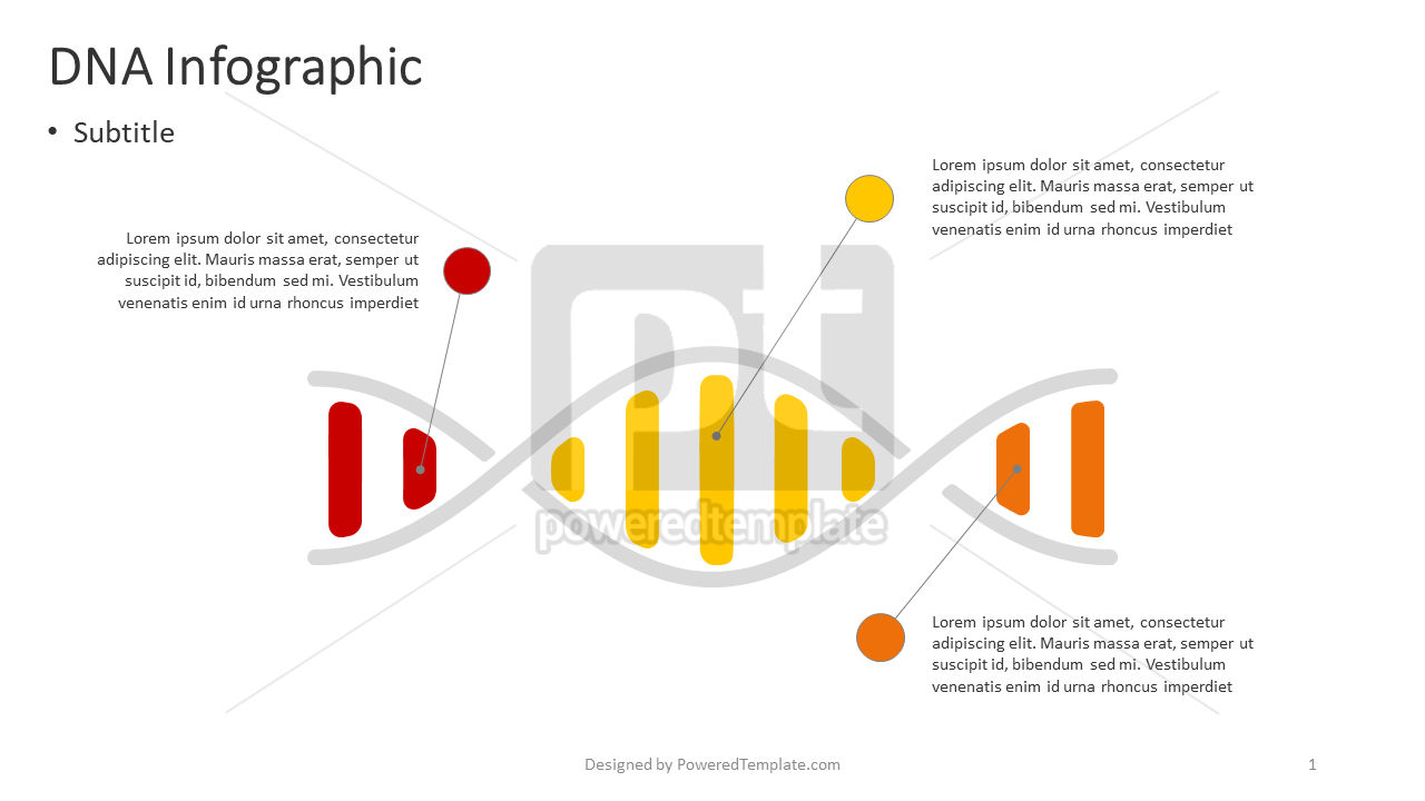 DNA Infographic, 04383, Infographics — PoweredTemplate.com