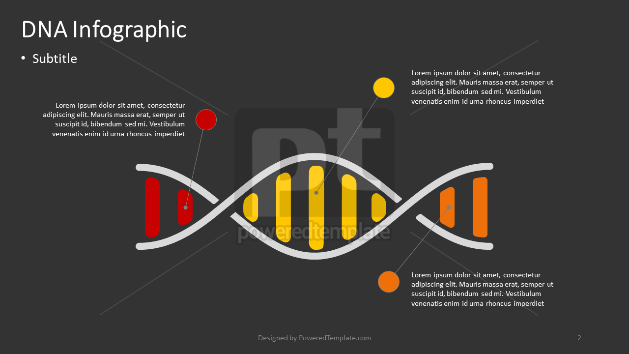 DNA Infographic, Slide 2, 04383, Infographics — PoweredTemplate.com