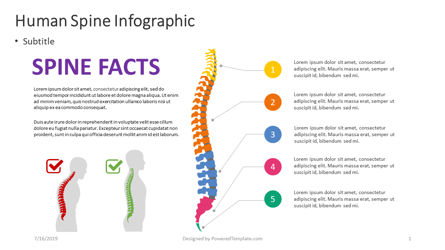 Infographics: Human Spine Infographic #04389