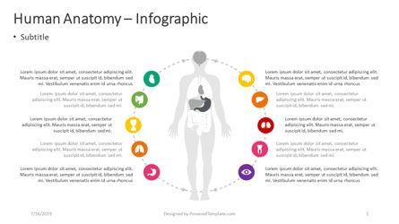 Infographics: 인체 해부학 - 인포 그래픽 #04390