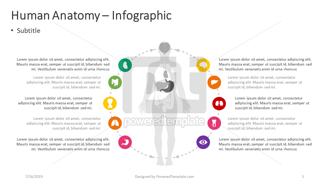 Anatomie humaine - infographie, 04390, Infographies — PoweredTemplate.com