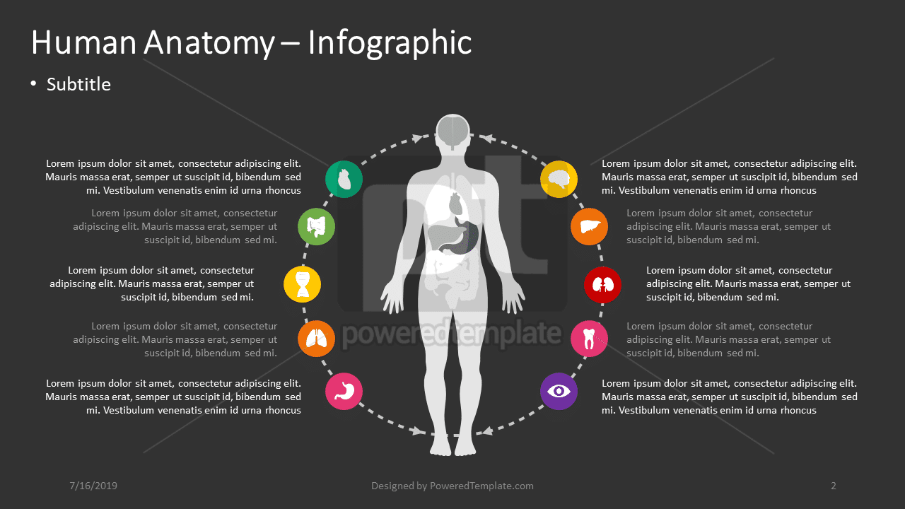 Anatomie humaine - infographie, Diapositive 2, 04390, Infographies — PoweredTemplate.com