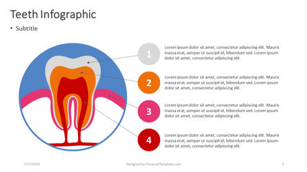 Infographics: Infographie des dents #04391