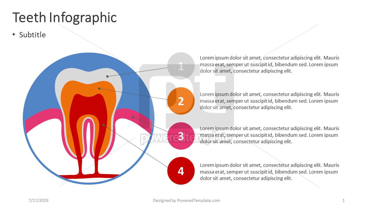 Teeth Infographic, 04391, Infographics — PoweredTemplate.com