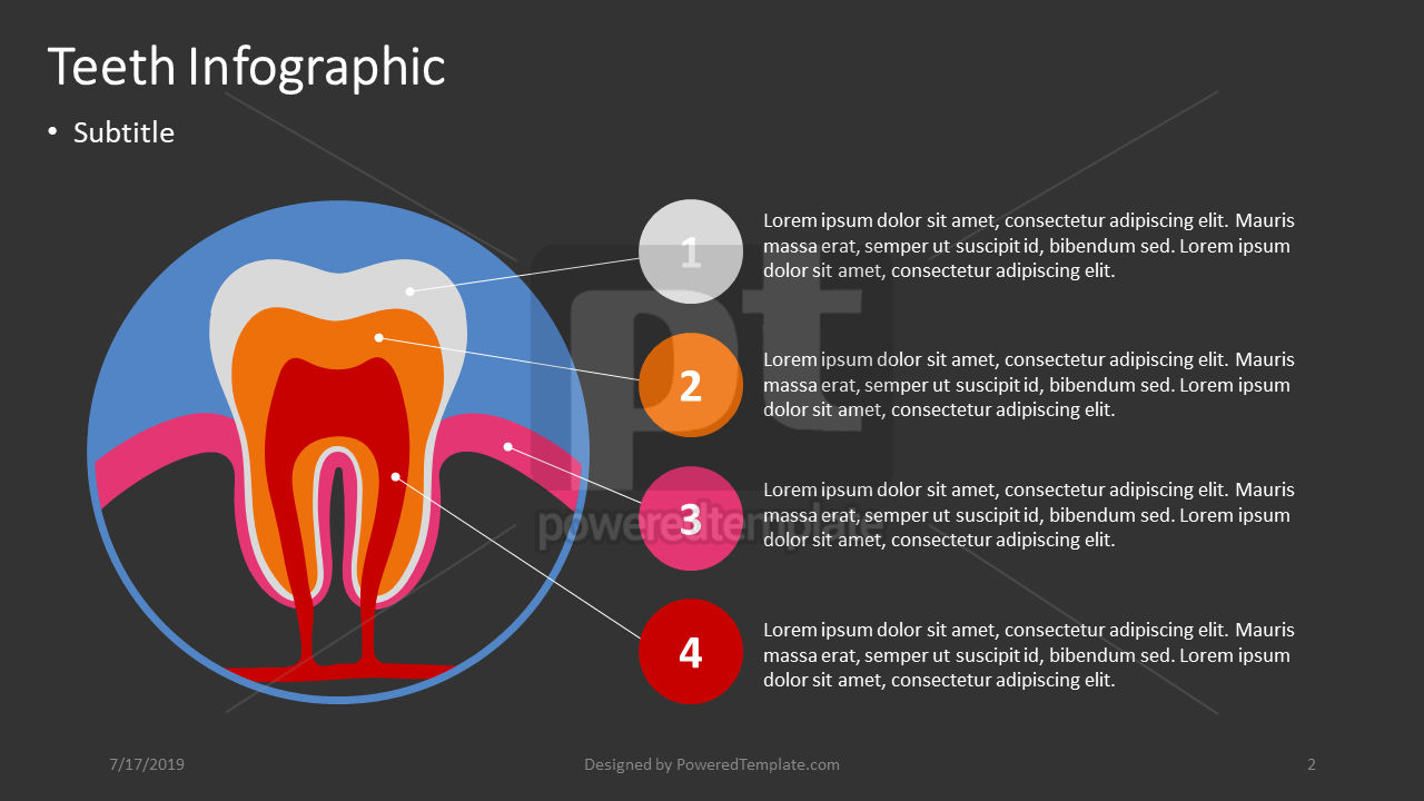 Teeth Infographic, Slide 2, 04391, Infographics — PoweredTemplate.com