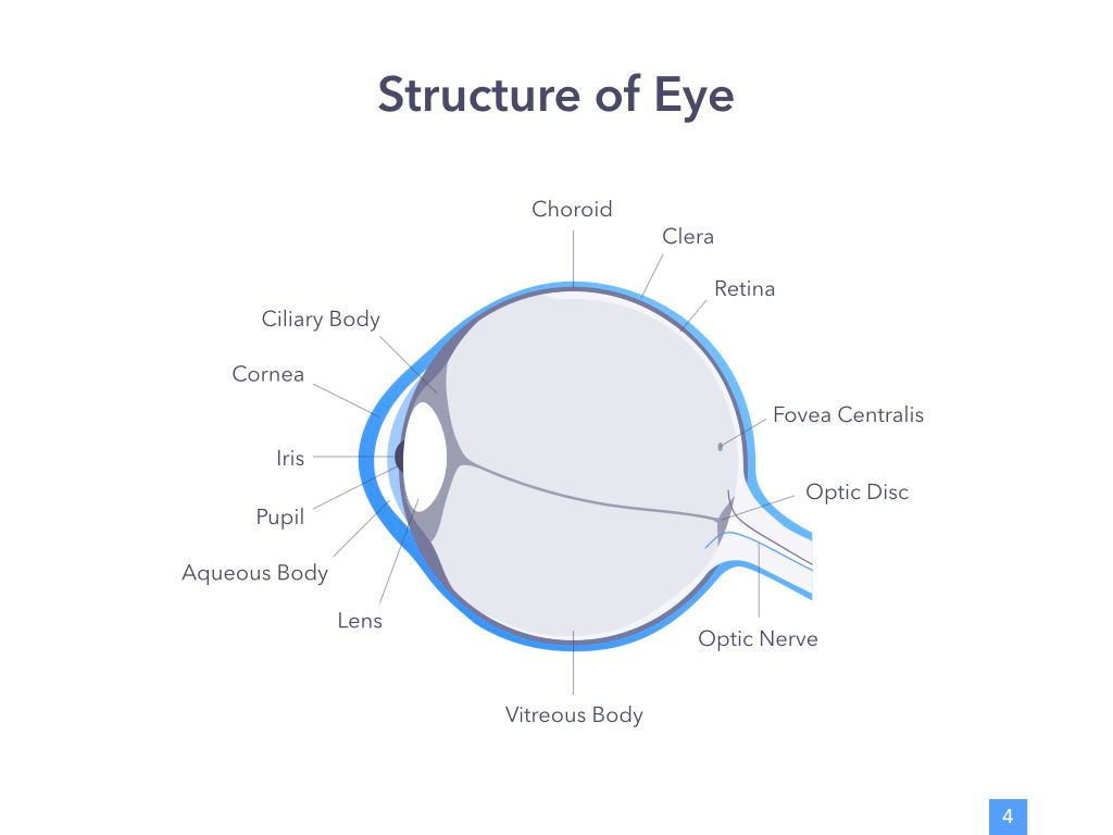 Eye Health Google Slides Template, Slide 5, 04845, Medical Diagrams and Charts — PoweredTemplate.com