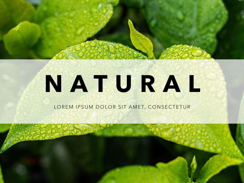 Natural 02 Powerpoint Presentation Template, Slide 12, 04903, Business Models — PoweredTemplate.com