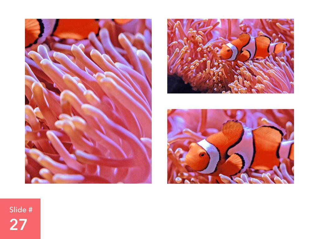 Living Coral Keynote Theme, Slide 28, 04976, Presentation Templates — PoweredTemplate.com