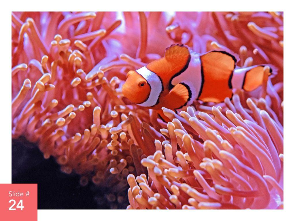 Living Coral Google Slides Theme, Slide 25, 04980, Presentation Templates — PoweredTemplate.com