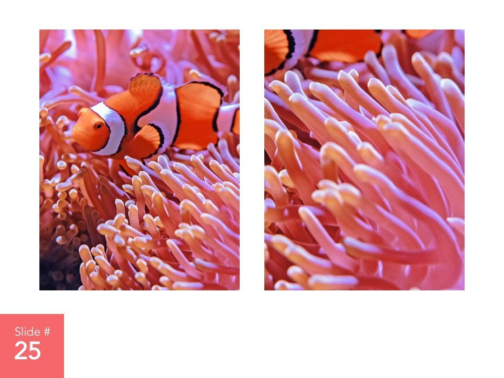 Living Coral Google Slides Theme, Slide 26, 04980, Presentation Templates — PoweredTemplate.com