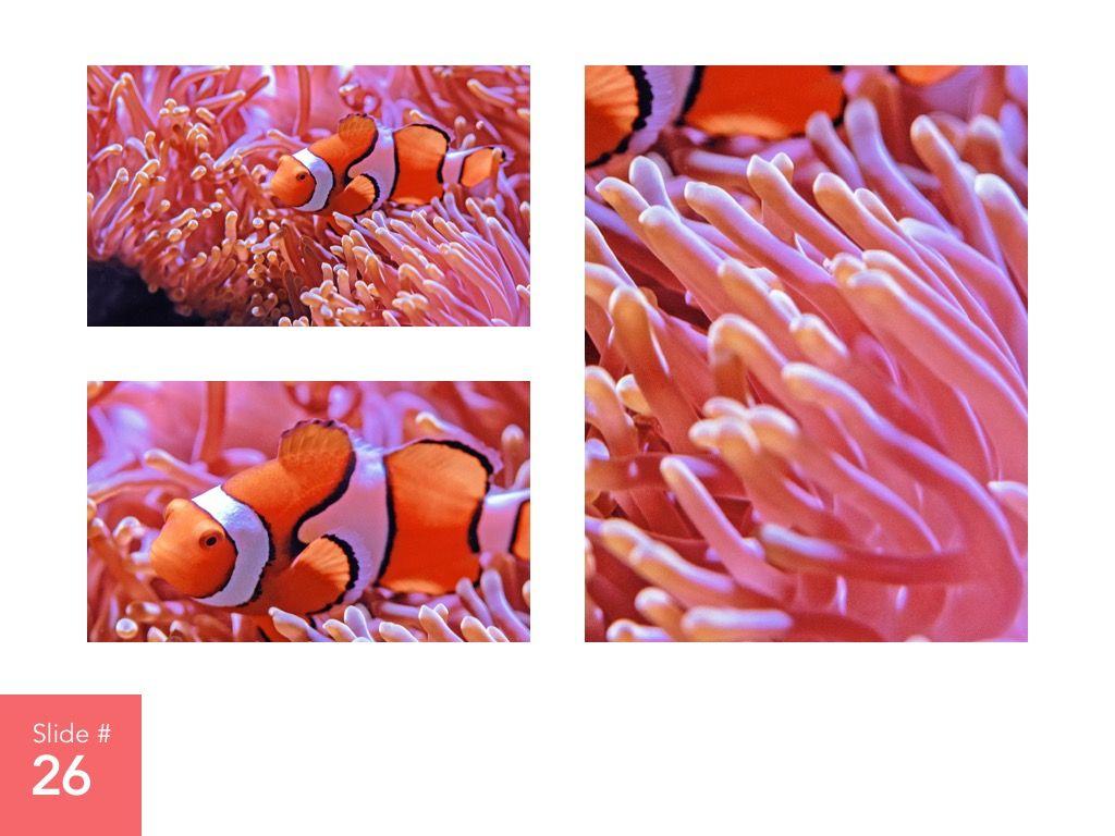 Living Coral Google Slides Theme, Slide 27, 04980, Presentation Templates — PoweredTemplate.com