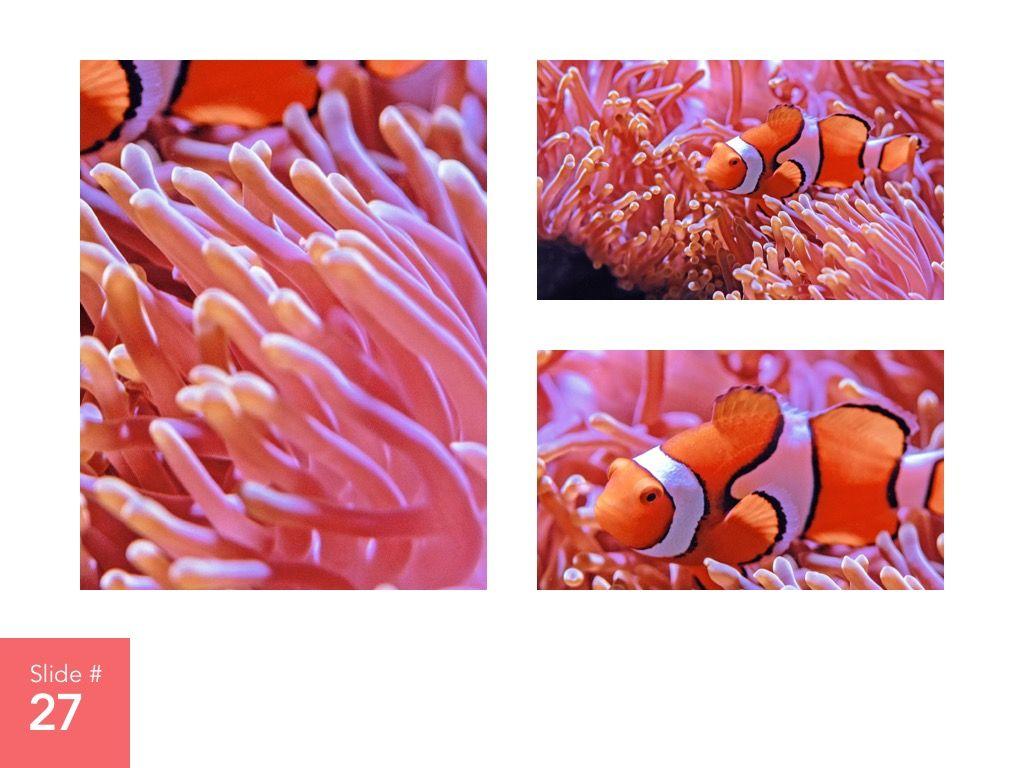 Living Coral Google Slides Theme, Slide 28, 04980, Presentation Templates — PoweredTemplate.com