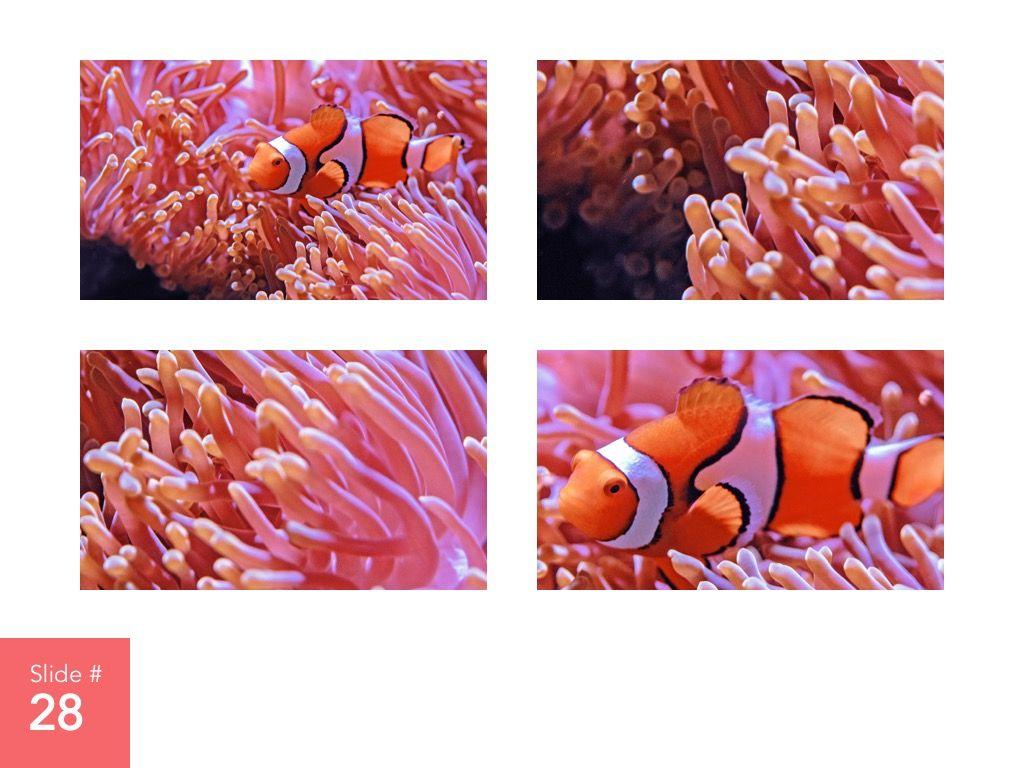 Living Coral Google Slides Theme, Slide 29, 04980, Presentation Templates — PoweredTemplate.com