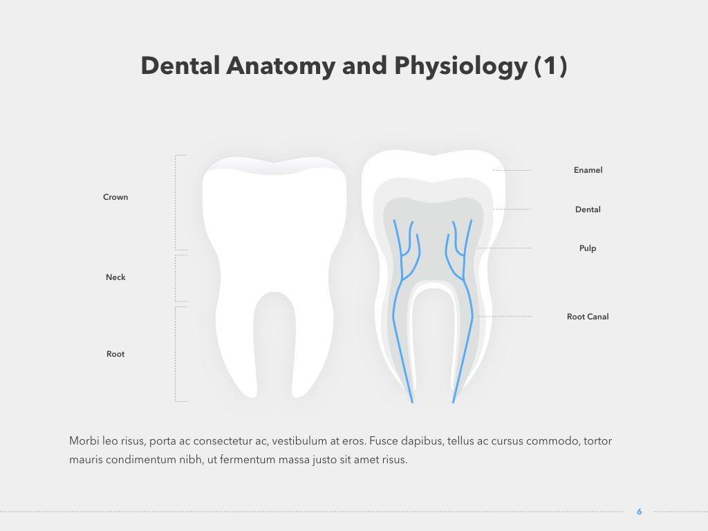 Dentistry Keynote Template, Slide 7, 04993, Medical Diagrams and Charts — PoweredTemplate.com