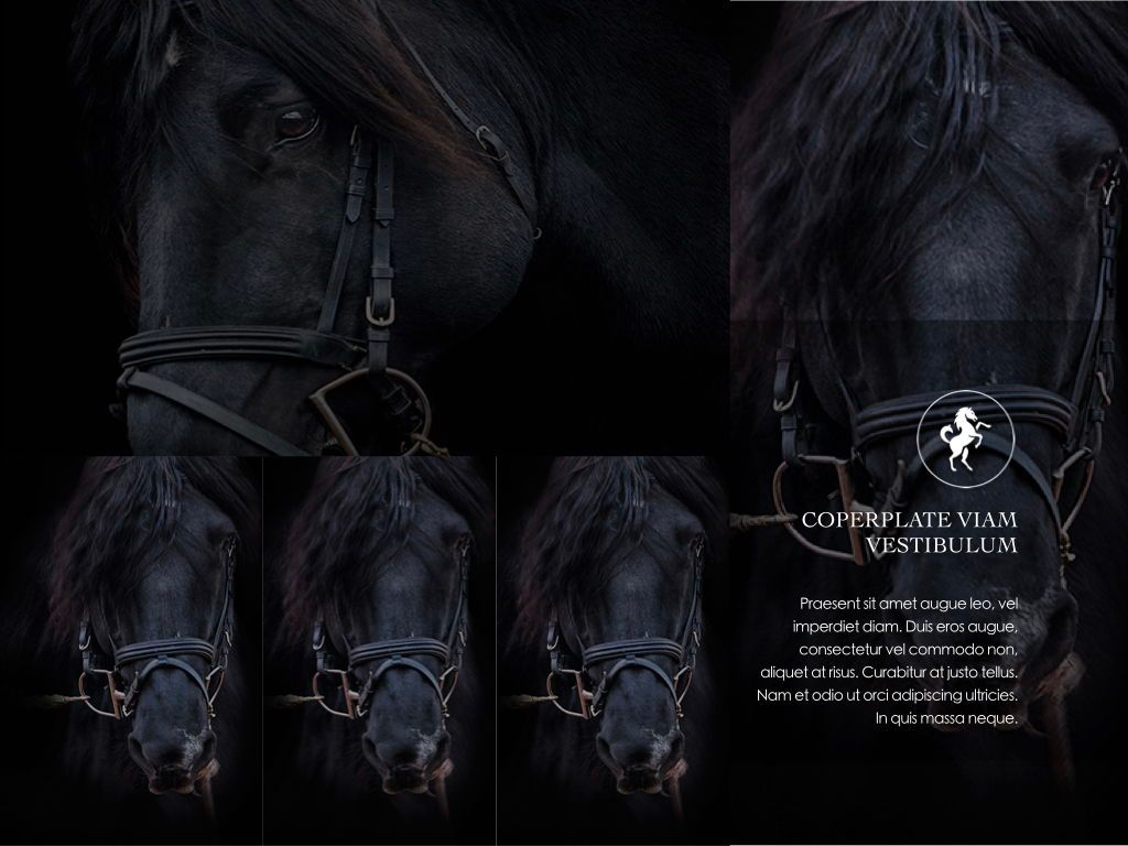 Equestrian Powerpoint Presentation Template, Slide 19, 05103, Presentation Templates — PoweredTemplate.com