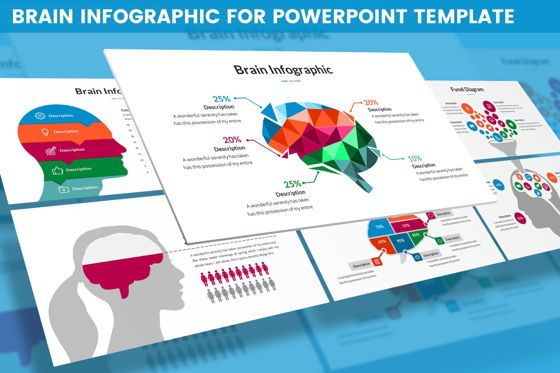 Business Models: Brain Infographic for Powerpoint Template #05895