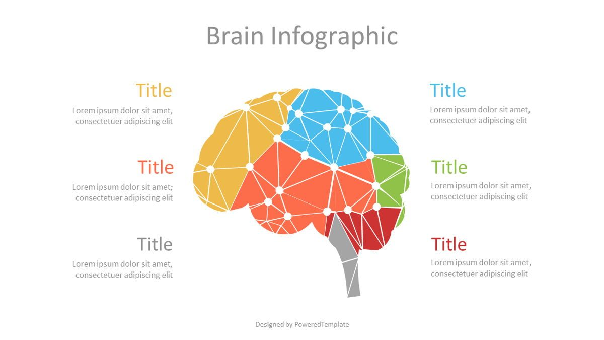 Cybernetic Brain Lobes Infographic, 07113, Infographics — PoweredTemplate.com