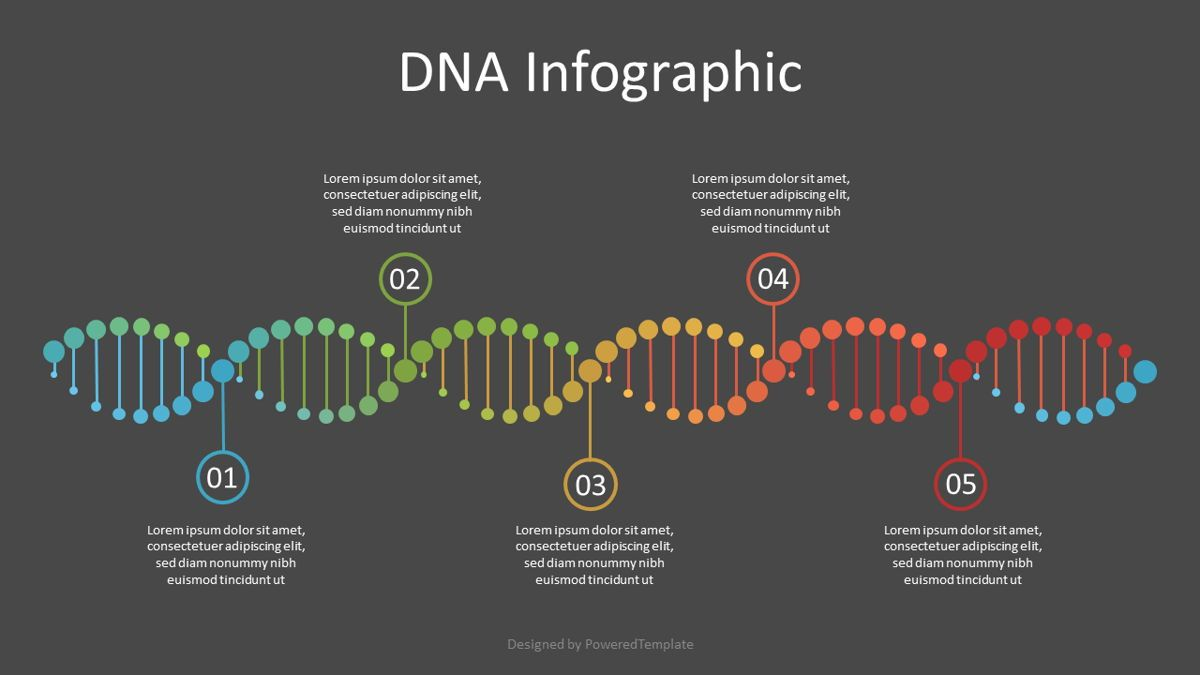 DNA Timeline Infographic, 07121, Education Charts and Diagrams — PoweredTemplate.com
