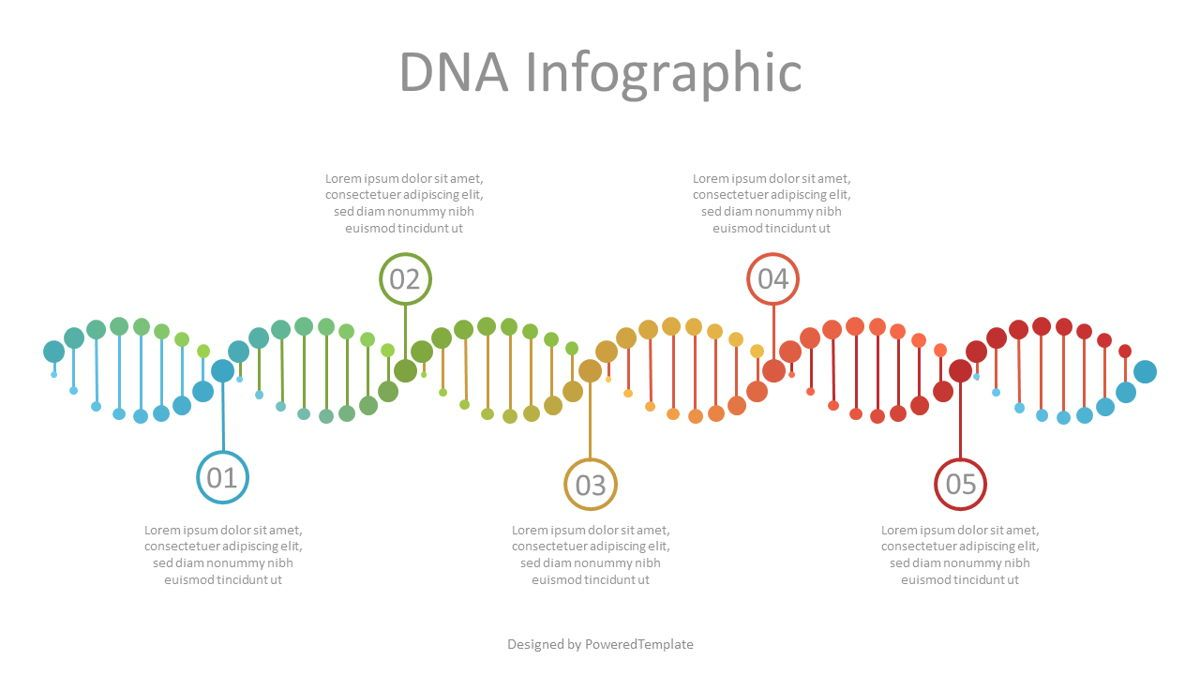DNA Timeline Infographic, Slide 2, 07121, Education Charts and Diagrams — PoweredTemplate.com